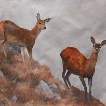 Hillside with Red Deer