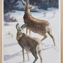 Two Deer in Snow